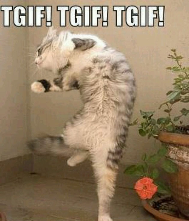 TGIF jumping cat