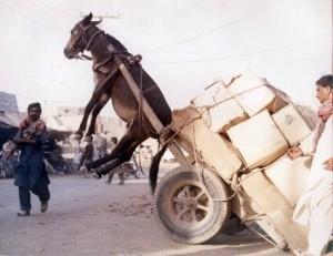 Working like a donkey