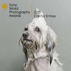Sony 2015 call