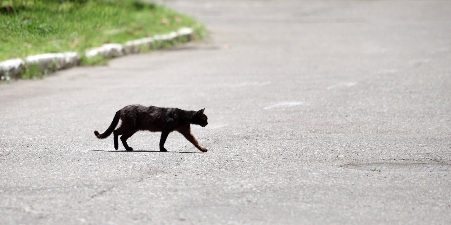 Black cat crossing the road.